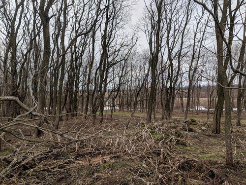 Lot 2 Hanley Road : Hannibal : Oswego County : New York