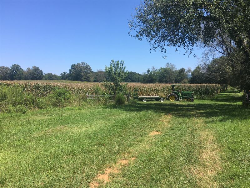 Farm Land Convenient With Spring : Land for Sale : Decherd : Franklin  County : Tennessee