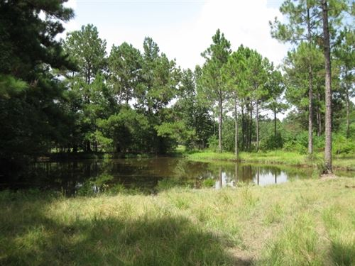 20 Acres S Jake Talley Rd : Bogalusa : Washington Parish : Louisiana
