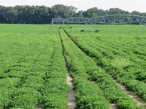 Irrigated Farm With Great Hunting : Greenwood : Jackson County : Florida