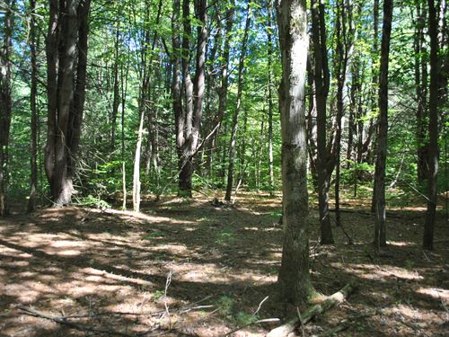 Pine-Wooded Lot For Building 1 : Vienna : Oneida County : New York