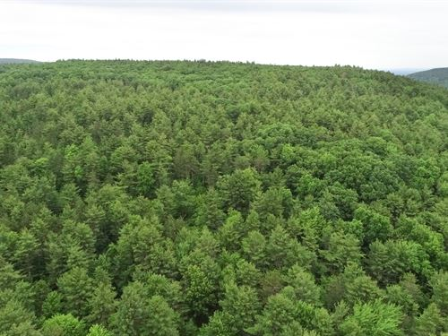 Sloping Topography And Woods : Coeymans : Albany County : New York