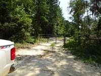 Super Hunting In South Twiggs : Tarversville : Twiggs County : Georgia