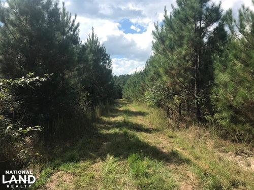 Sulligent Hunting Tract on Blue Bir : Sulligent : Lamar County : Alabama