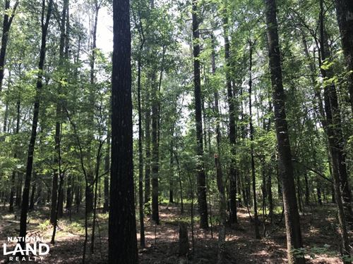 5.9 Acre Home Site & Timberland : Star City : Lincoln County : Arkansas