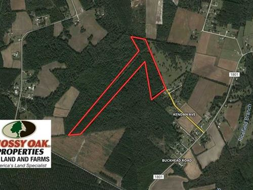 34.88 Acres of Timber And Hunting : Bolton : Columbus County : North Carolina