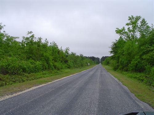 Camp Tract : Latta : Dillon County : South Carolina