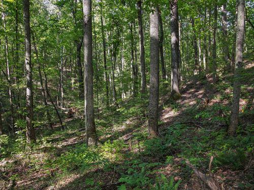 Big Hardwood Timber : Sylacauga : Coosa County : Alabama