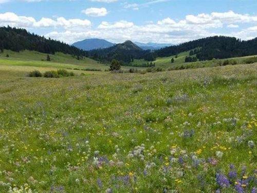 Prewett Creek : Cascade : Montana