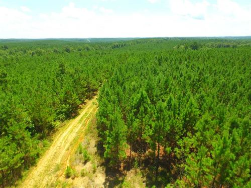 79 Acres, County Road 122, Mario : Hamilton : Marion County : Alabama