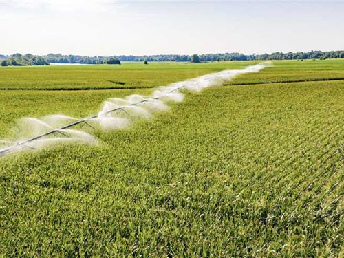300 Row Crop Acres, On White : Oil Trough : Independence County : Arkansas