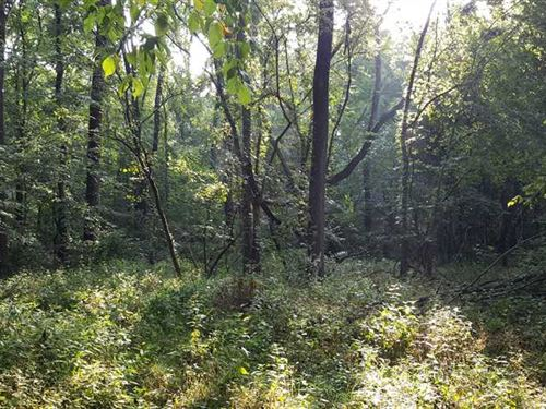 4.6 Acres of All Woods With Potent : Greensburg : Decatur County : Indiana