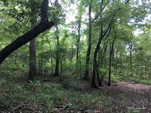 40 Ac, Hunting Tract : Winnsboro : Franklin Parish : Louisiana