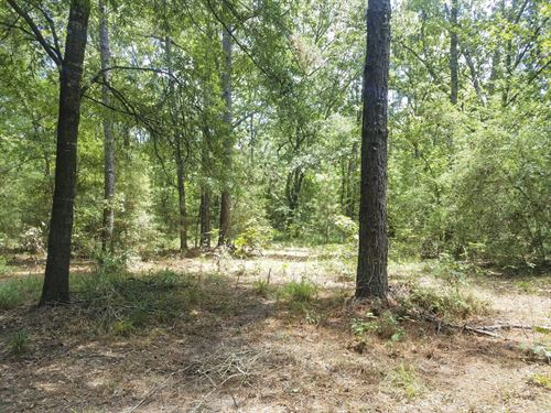 Get Lost In The National Forest : New Waverly : San Jacinto County : Texas