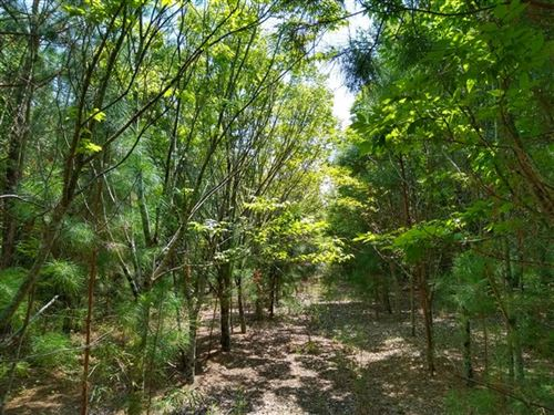 114 Acres - Williamsburg County Sc : Kingstree : Williamsburg County : South Carolina