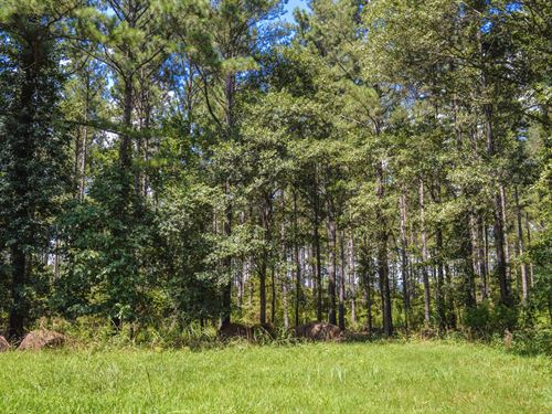 12 Acre Wooded Home Site Near Moore : Woodruff : Spartanburg County : South Carolina