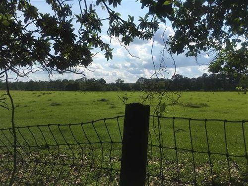 Pierce Farm, Beauregard Parish, 16 : Dequincy : Beauregard Parish : Louisiana
