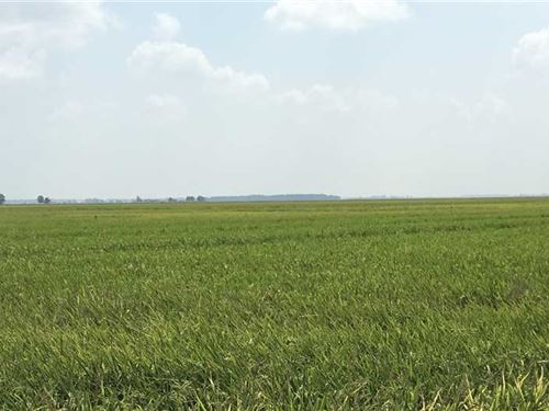 386 Acre Row Crop Farm, Poinse : Waldenburg : Poinsett County : Arkansas