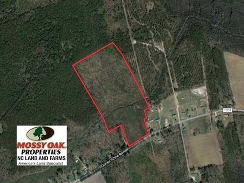 30 Acres of Prime Hunting And : Roper : Washington County : North Carolina