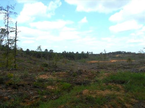 112 Acres In Montgomery County, Ms : Kilmichael : Montgomery County : Mississippi