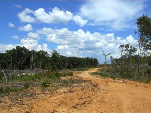 105 Acres In Grenada County In Coff : Coffeeville : Grenada County : Mississippi