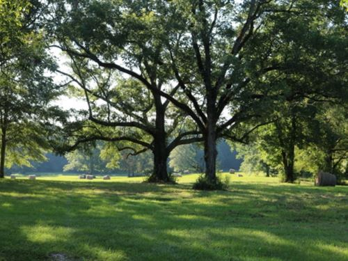 240 Acres In Newton County In Union : Union : Newton County : Mississippi