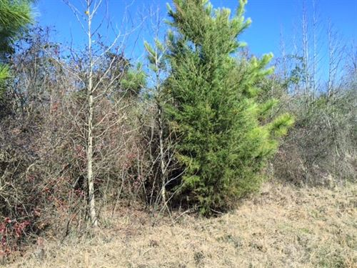 Wooded 5 Acre Homesite : De Kalb : Bowie County : Texas