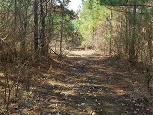Timber Hunting Or Recreational : De Kalb : Bowie County : Texas