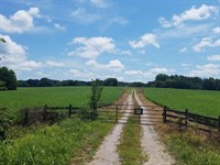 Land And Timber Auction : Phenix : Charlotte County : Virginia