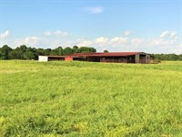 Cattle Grazing Rolling Ranch Land : De Kalb : Bowie County : Texas