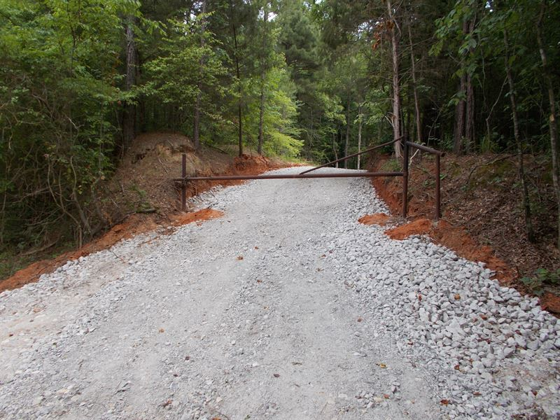 9.5 Wooded Acres Deer Hunting : De Kalb : Bowie County : Texas