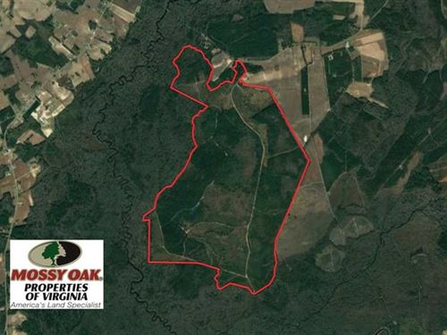 1337 Acres of Hunting And Timber : Lumberton : Robeson County : North Carolina