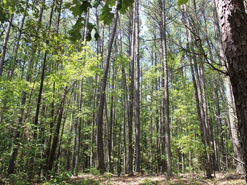 Great Location With Big Timber : Monticello : Jasper County : Georgia