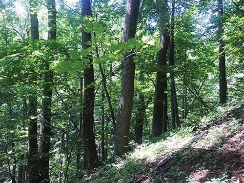 Real Estate Auction 1,356 Acres : Callaway : Franklin County : Virginia