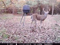 Deer Hunting Or Timber Investment : De Kalb : Bowie County : Texas