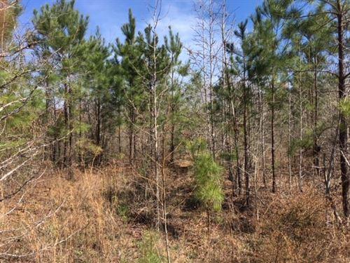 Newsome Woods Lot 4 : Opelika : Lee County : Alabama