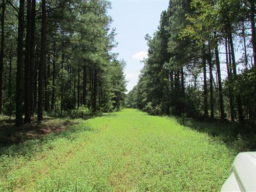 Davis Station Tract : Summerton : Clarendon County : South Carolina