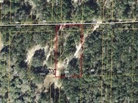 Nice Wooded 1.25 Ac Lot 776289 : Bronson : Levy County : Florida