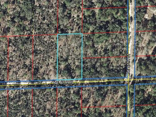1.25 Acre Wooded Lot 776264 : Bronson : Levy County : Florida