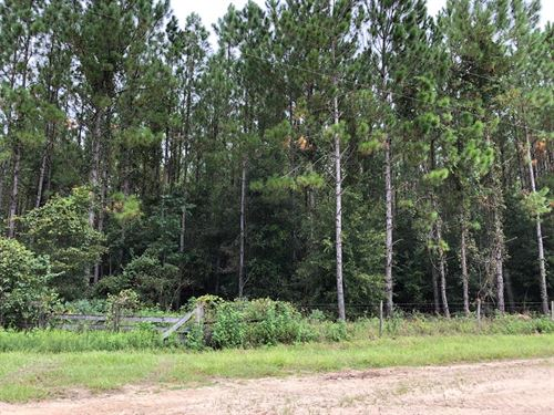 Beautiful Pines On This 4.59 Ac : Chiefland : Levy County : Florida