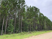9.16 Acres With Pines 776260 : Chiefland : Levy County : Florida
