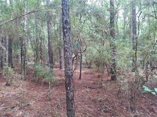 10 Acres in Vernon, FL : Vernon : Washington County : Florida