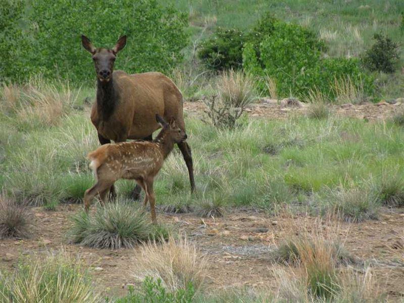 Elk Valley Ranch : Florence : Fremont County : Colorado