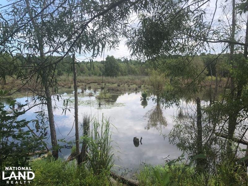 Calhoun County Duck Hole : Bruce : Calhoun County : Mississippi