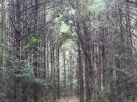 16 +/- Acres North Creek Rd : Opp : Covington County : Alabama