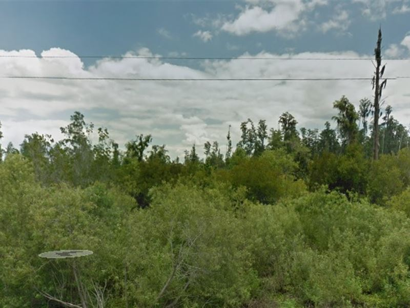 Wooded Lot For Sale $22,500 : Polk County : Polk County : Florida