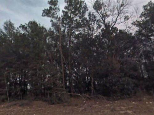 Marion County, Fl $49,999 Neg. : Ocala : Marion County : Florida