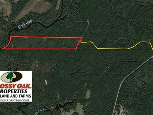 52 Acres of Hunting Land For Sale : Ivanhoe : Sampson County : North Carolina