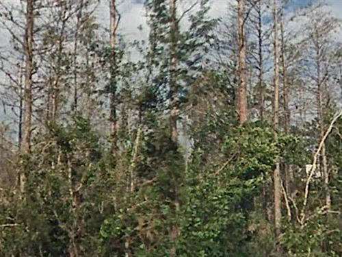 Osceola County, Fl $35,000 Neg : Saint Cloud : Osceola County : Florida