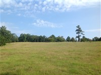 Timber And Pasture Land : Marion : Perry County : Alabama